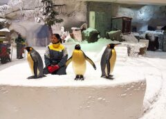 Make your Visit to Ski Dubai Thrilling by Having an Encounter with Snow Penguins